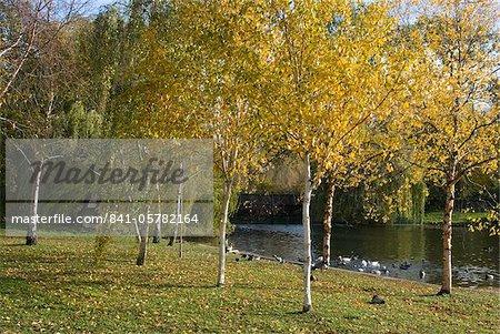 Couleurs d'automne de l'étang de Regent Park, London NW1, Angleterre, Royaume-Uni, Europe