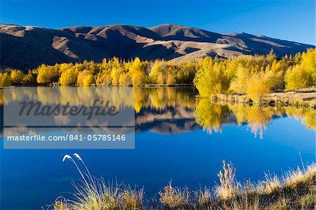 Couleurs automne dorés reflètent dans un lac près de Twizel, Canterbury, île du Sud, Nouvelle-Zélande, Pacifique