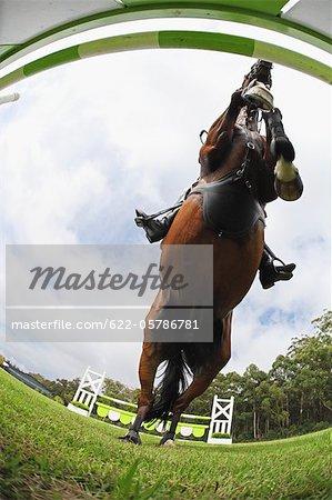 Pferd springen Hürde, direkt unterhalb