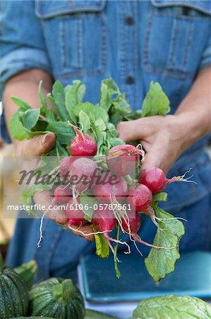 Farmer mains tenue radis