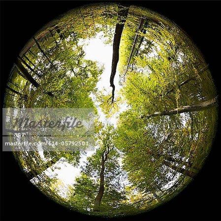 Fisheye Perspektive der Bäume im Wald