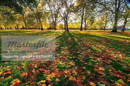 Hyde Park im Herbst, London, England, Vereinigtes Königreich, Europa