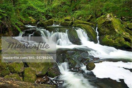 Fleuve Fowey Golitha Falls National Nature Reserve, bois de chênes sessiles, Bodmin Moor, Cornwall, Angleterre, Royaume-Uni, Europe