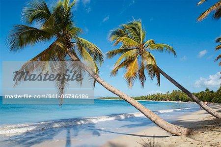 Arbres argent de sable et de palmiers, plage de Sainte Anne, Martinique, département français d'outre-mer, îles sous-le-vent, Antilles, Caraïbes, Amérique centrale