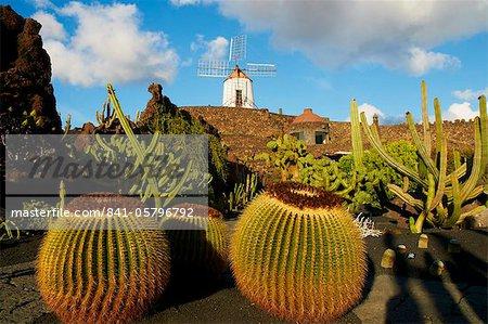 Cactus garden of Guatiza, Lanzarote, Canary Islands, Spain, Europe