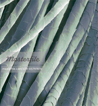 Cashmere wool fibres, SEM
