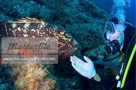 Mérou (Epinephelus Marginatus), Port-Cros