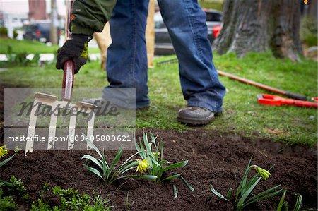 Jardinier labourer le sol de jardin avec Pitchfork, Toronto, Ontario, Canada