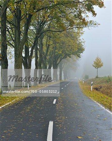 Route de campagne bordée d'arbres en automne, montagne Rhon, Hesse, Allemagne