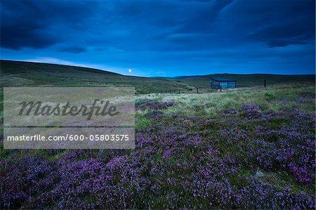 Moorlands from Scottish Border, Lamb Hill and Yearning Saddle Refuge Hut, Cheviot Hills, Northumberland National Park, England