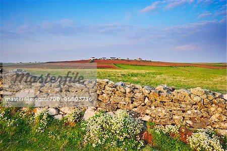 Farmland, Lizard Point, Lizard Peninsula, Cornwall, England