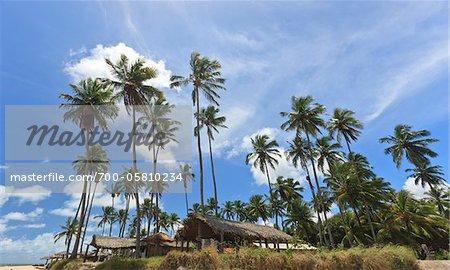Thatched Roof Huts and Palm Trees, Praia de Tabatinga, Paraiba, Brazil