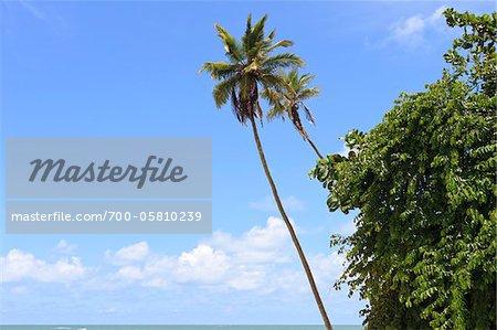 Palmen Sie und blauer Himmel, Praia da Barra de Gramame, Joao Pessoa, Paraiba, Brasilien