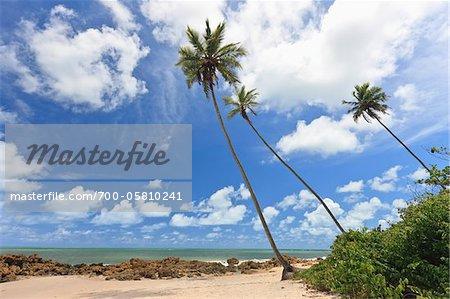 Palm Trees, Praia de Tabatinga, Tabatinga Beach, Paraiba, Brazil