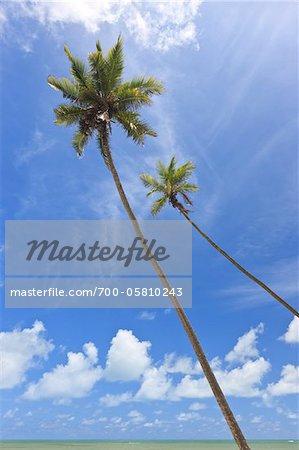Palm Trees and Blue Sky, Praia de Tabatinga, Tabatinga Beach, Paraiba, Brazil