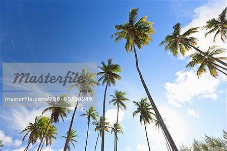 Palm Trees, Praia de Tabatinga, Paraiba, Brazil