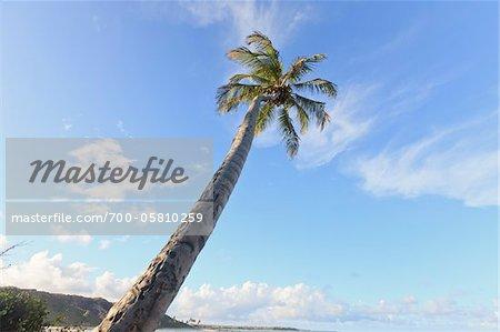 Palm Tree, Praia de Coqueirinho, Paraiba, Brazil