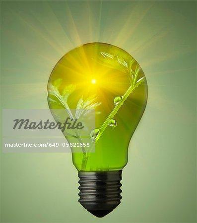 Plante qui pousse en ampoule