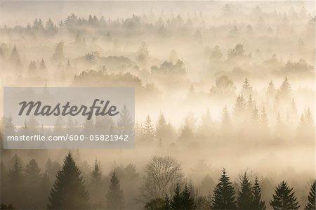Morgens Nebel, Isartal, Bad Tölz-Wolfratshausen Upper Bavaria, Bayern, Deutschland