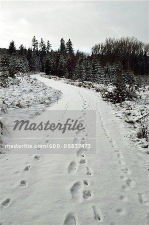Fußabdrücke im Schnee auf den Trail in der Nähe von Villingen-Schwenningen, Schwarzwald, Baden-Württemberg, Deutschland