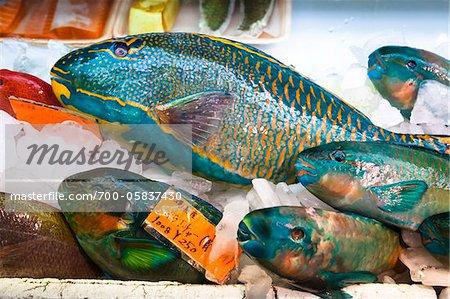 Parrot Fish in Makisha Public Market, Naha, Okinawa, Japan