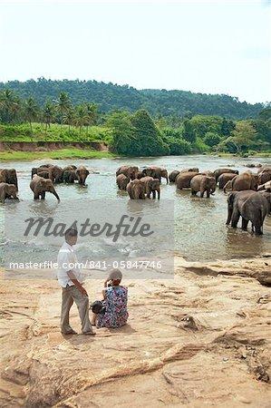 Asian elephants bathing in the river, Pinnawela Elephant Orphanage, Sri Lanka, Asia