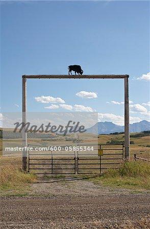 Gate at Tacarsey Bison Ranch, Pincher Creek, Alberta, Canada