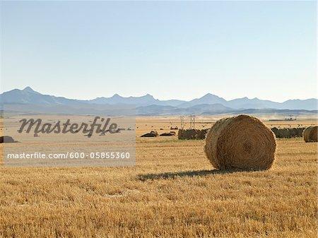 Hay Bales in Fields, Pincher Creek, Alberta, Canada