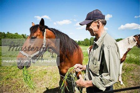 Man feeding horse on field