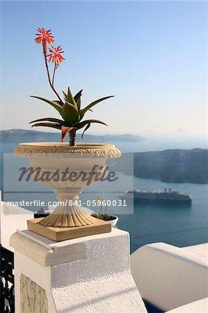 Firostefani, Santorini, Cyclades Islands, Greek Islands, Greece, Europe