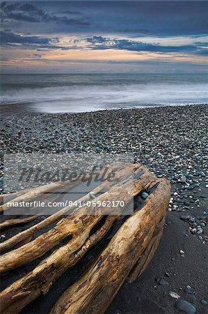 Grande bois flotté sur Gillespies Beach, côte ouest, île du Sud, Nouvelle-Zélande, Pacifique