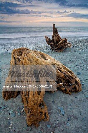 Bois flotté le long de Gillespies Beach sur la côte de l'île du Sud, Nouvelle-Zélande, Pacifique