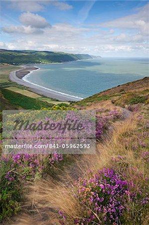 Coast path on Bossington Hill above Porlock Bay, Exmoor, Somerset, United Kingdom, Europe