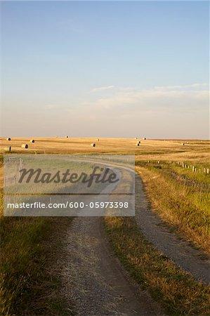 Gravel Road through Hay Fields, Pincher Creek, Alberta, Canada