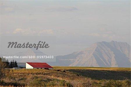 Farm Building, Mountains in Distance, Utopia Farm, Pincher Creek, Alberta, Canada