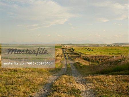 Gravel Road through Canola Fields and Farms, Pincher Creek, Alberta, Canada