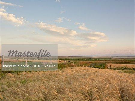 Vue d'ensemble des terres agricoles, Pincher Creek, Alberta, Canada
