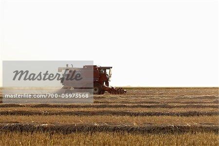 Axial-Flow combiner la récolte de blé dans le champ, Starbuck, Manitoba, Canada
