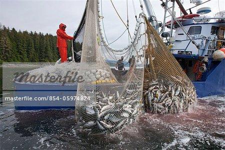 Les pêcheurs commerciaux senne transporter leur net alors qu'il pêchait rose et le saumon kéta, détroit de Chatham, île de l'Amirauté, sud-est de l'Alaska (unité de gestion 12)