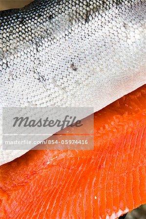 Gros plan du saumon fraîchement pêché et nettoyé de la Mulchatna River, région de la baie de Bristol, sud-ouest de l'Alaska, l'été