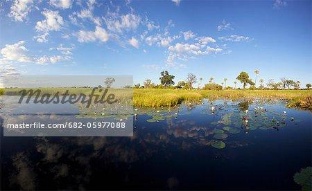 A scenic view of the Okavango Delta, Botswana