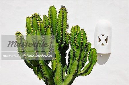 Cactus. Lanzarote, Canary Islands