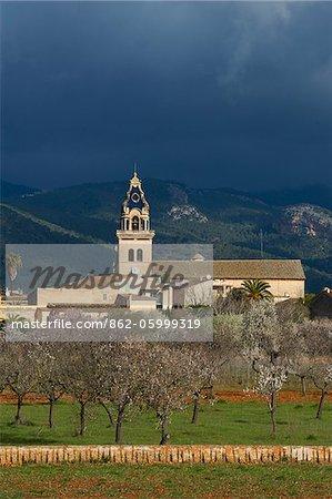Mandelblüte in der Nähe von Santa Maria del Cami, Tramuntana, Mallorca, Balearen, Spanien