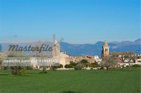 Mandelblüte in der Nähe von Algaida, Mallorca, Balearen, Spanien