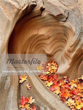Rocher en forme de coeur, Zion National Park, Utah, États-Unis d'Amérique