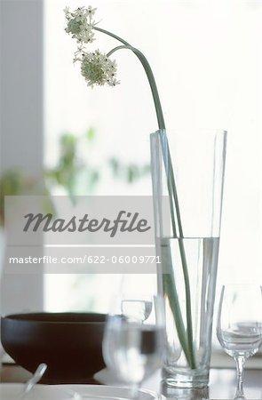 Fleurs blanches dans Vase en verre