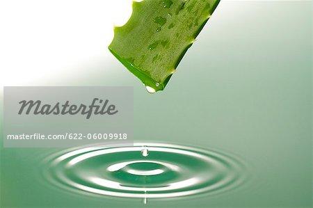 Gel Drop Dropping From Aloe Vera Leaf