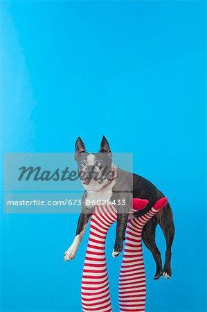 Beine in gestreiften Socken mit bunten Schuhen mit Hund