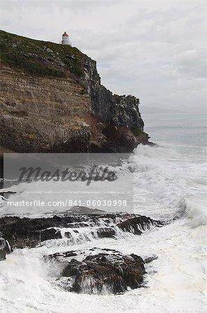 Royal Albatross Centre, Dunedin, Otago Peninsula, South Island, New Zealand, Pacific
