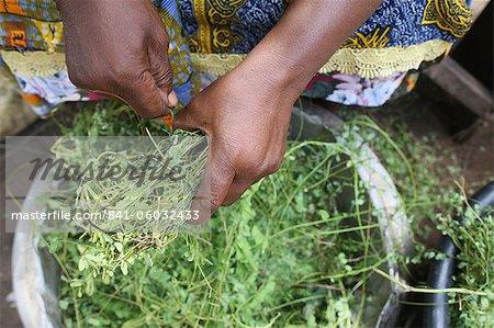 Kräutermedizin, Lome, Togo, Westafrika, Afrika